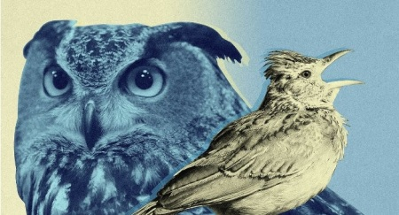 OwlsVsLarks